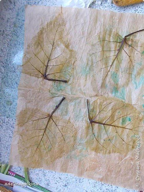 Скелетирование листьев Для скелетирования листьев необходимо. Посуда для кипячения листьев, мне удобнее всего была стекляная. Стекляная доска 2 губки: мягкая и жёсткая порошок  «Rohrfrei» бумага для выпечки перчатки листья фото 5