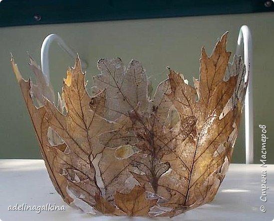 Скелетирование листьев Для скелетирования листьев необходимо. Посуда для кипячения листьев, мне удобнее всего была стекляная. Стекляная доска 2 губки: мягкая и жёсткая порошок  «Rohrfrei» бумага для выпечки перчатки листья фото 11