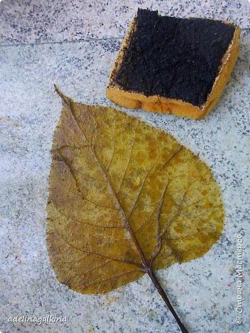 Скелетирование листьев Для скелетирования листьев необходимо. Посуда для кипячения листьев, мне удобнее всего была стекляная. Стекляная доска 2 губки: мягкая и жёсткая порошок  «Rohrfrei» бумага для выпечки перчатки листья фото 2