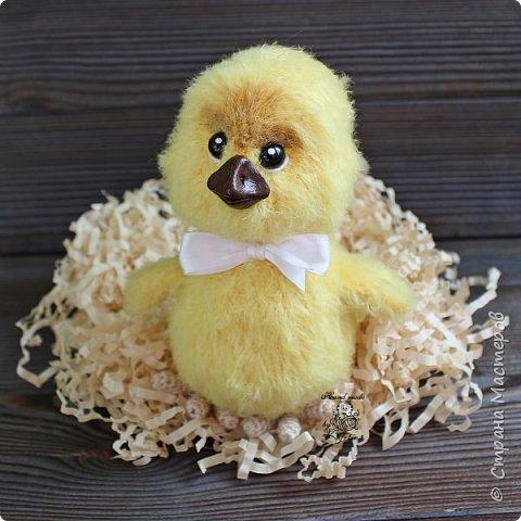 Цыплёнок фото 4