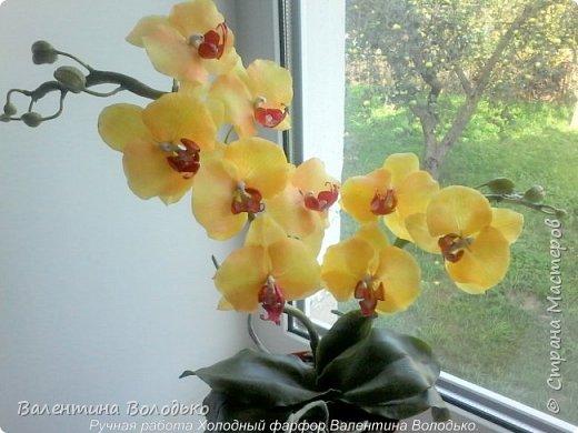 Добрый день жители Страны Мастеров.У меня снова орхидейка. фото 5