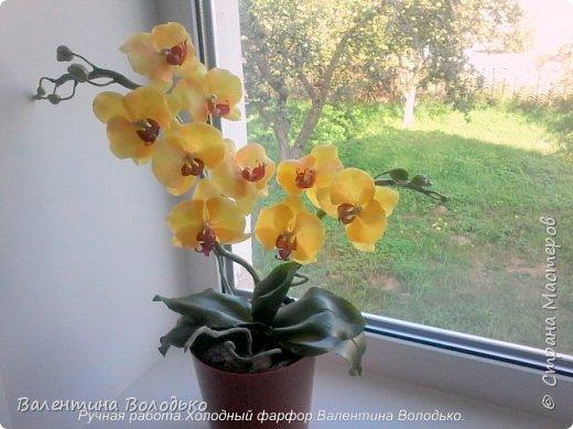Добрый день жители Страны Мастеров.У меня снова орхидейка. фото 1