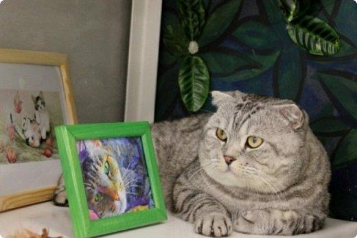 """Здравствуйте, дорогие друзья!!! Приглашаю всех любителей котов и кошек на экскурсию в необычный кошачий музей, который находится в центре Минска. Музей Кота - уникальное в своём роде культурно-развлекательное место, где живёт, пожалуй, самое милое произведение искусства, созданное матушкой-природой. Главные """"экспонаты"""" музея - это живые коты и кошки!!! фото 4"""