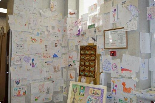 """Здравствуйте, дорогие друзья!!! Приглашаю всех любителей котов и кошек на экскурсию в необычный кошачий музей, который находится в центре Минска. Музей Кота - уникальное в своём роде культурно-развлекательное место, где живёт, пожалуй, самое милое произведение искусства, созданное матушкой-природой. Главные """"экспонаты"""" музея - это живые коты и кошки!!! фото 74"""