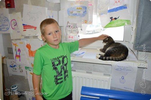 """Здравствуйте, дорогие друзья!!! Приглашаю всех любителей котов и кошек на экскурсию в необычный кошачий музей, который находится в центре Минска. Музей Кота - уникальное в своём роде культурно-развлекательное место, где живёт, пожалуй, самое милое произведение искусства, созданное матушкой-природой. Главные """"экспонаты"""" музея - это живые коты и кошки!!! фото 76"""