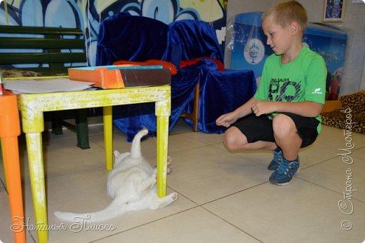 """Здравствуйте, дорогие друзья!!! Приглашаю всех любителей котов и кошек на экскурсию в необычный кошачий музей, который находится в центре Минска. Музей Кота - уникальное в своём роде культурно-развлекательное место, где живёт, пожалуй, самое милое произведение искусства, созданное матушкой-природой. Главные """"экспонаты"""" музея - это живые коты и кошки!!! фото 10"""