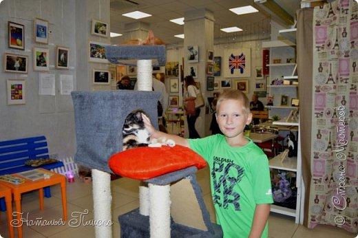 """Здравствуйте, дорогие друзья!!! Приглашаю всех любителей котов и кошек на экскурсию в необычный кошачий музей, который находится в центре Минска. Музей Кота - уникальное в своём роде культурно-развлекательное место, где живёт, пожалуй, самое милое произведение искусства, созданное матушкой-природой. Главные """"экспонаты"""" музея - это живые коты и кошки!!! фото 7"""