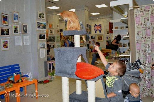 """Здравствуйте, дорогие друзья!!! Приглашаю всех любителей котов и кошек на экскурсию в необычный кошачий музей, который находится в центре Минска. Музей Кота - уникальное в своём роде культурно-развлекательное место, где живёт, пожалуй, самое милое произведение искусства, созданное матушкой-природой. Главные """"экспонаты"""" музея - это живые коты и кошки!!! фото 13"""