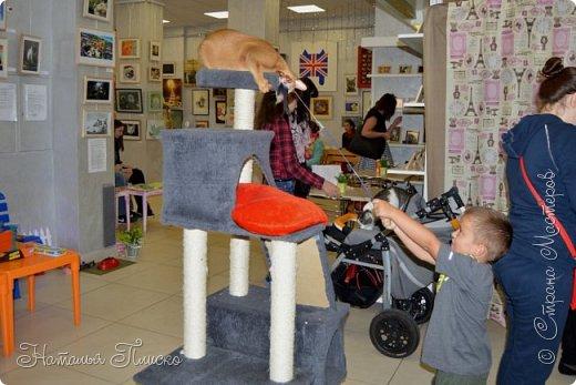 """Здравствуйте, дорогие друзья!!! Приглашаю всех любителей котов и кошек на экскурсию в необычный кошачий музей, который находится в центре Минска. Музей Кота - уникальное в своём роде культурно-развлекательное место, где живёт, пожалуй, самое милое произведение искусства, созданное матушкой-природой. Главные """"экспонаты"""" музея - это живые коты и кошки!!! фото 14"""