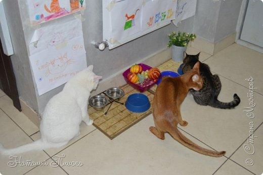 """Здравствуйте, дорогие друзья!!! Приглашаю всех любителей котов и кошек на экскурсию в необычный кошачий музей, который находится в центре Минска. Музей Кота - уникальное в своём роде культурно-развлекательное место, где живёт, пожалуй, самое милое произведение искусства, созданное матушкой-природой. Главные """"экспонаты"""" музея - это живые коты и кошки!!! фото 11"""