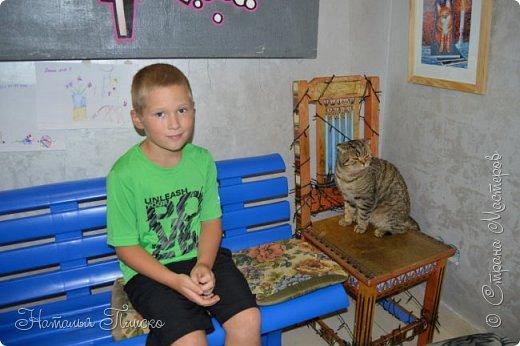 """Здравствуйте, дорогие друзья!!! Приглашаю всех любителей котов и кошек на экскурсию в необычный кошачий музей, который находится в центре Минска. Музей Кота - уникальное в своём роде культурно-развлекательное место, где живёт, пожалуй, самое милое произведение искусства, созданное матушкой-природой. Главные """"экспонаты"""" музея - это живые коты и кошки!!! фото 3"""
