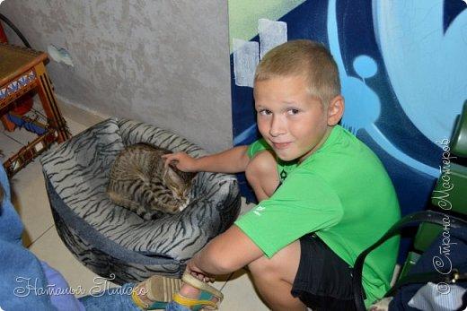 """Здравствуйте, дорогие друзья!!! Приглашаю всех любителей котов и кошек на экскурсию в необычный кошачий музей, который находится в центре Минска. Музей Кота - уникальное в своём роде культурно-развлекательное место, где живёт, пожалуй, самое милое произведение искусства, созданное матушкой-природой. Главные """"экспонаты"""" музея - это живые коты и кошки!!! фото 8"""