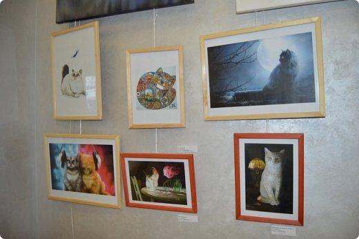 """Здравствуйте, дорогие друзья!!! Приглашаю всех любителей котов и кошек на экскурсию в необычный кошачий музей, который находится в центре Минска. Музей Кота - уникальное в своём роде культурно-развлекательное место, где живёт, пожалуй, самое милое произведение искусства, созданное матушкой-природой. Главные """"экспонаты"""" музея - это живые коты и кошки!!! фото 50"""