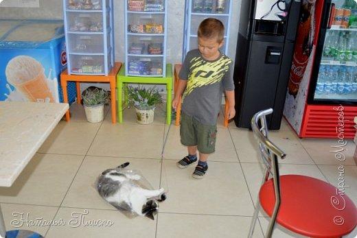 """Здравствуйте, дорогие друзья!!! Приглашаю всех любителей котов и кошек на экскурсию в необычный кошачий музей, который находится в центре Минска. Музей Кота - уникальное в своём роде культурно-развлекательное место, где живёт, пожалуй, самое милое произведение искусства, созданное матушкой-природой. Главные """"экспонаты"""" музея - это живые коты и кошки!!! фото 80"""
