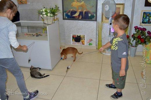 """Здравствуйте, дорогие друзья!!! Приглашаю всех любителей котов и кошек на экскурсию в необычный кошачий музей, который находится в центре Минска. Музей Кота - уникальное в своём роде культурно-развлекательное место, где живёт, пожалуй, самое милое произведение искусства, созданное матушкой-природой. Главные """"экспонаты"""" музея - это живые коты и кошки!!! фото 81"""