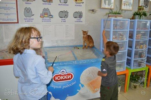 """Здравствуйте, дорогие друзья!!! Приглашаю всех любителей котов и кошек на экскурсию в необычный кошачий музей, который находится в центре Минска. Музей Кота - уникальное в своём роде культурно-развлекательное место, где живёт, пожалуй, самое милое произведение искусства, созданное матушкой-природой. Главные """"экспонаты"""" музея - это живые коты и кошки!!! фото 84"""