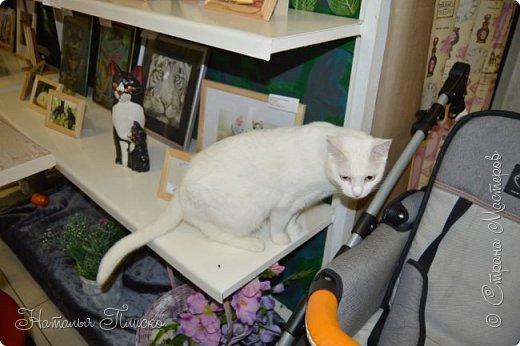 """Здравствуйте, дорогие друзья!!! Приглашаю всех любителей котов и кошек на экскурсию в необычный кошачий музей, который находится в центре Минска. Музей Кота - уникальное в своём роде культурно-развлекательное место, где живёт, пожалуй, самое милое произведение искусства, созданное матушкой-природой. Главные """"экспонаты"""" музея - это живые коты и кошки!!! фото 85"""