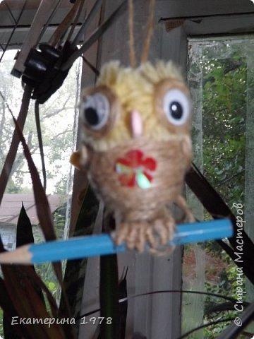 Совушка, сова большой нос фото 3