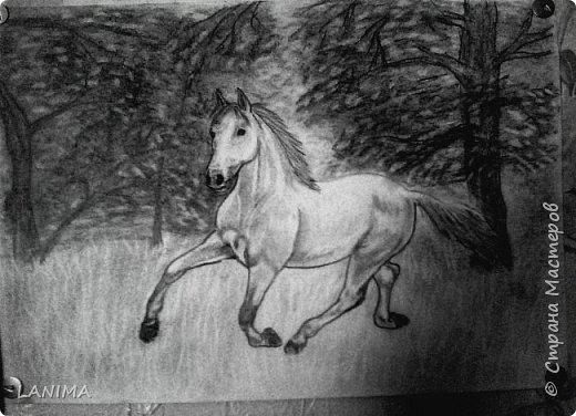 лошадь в карандаше
