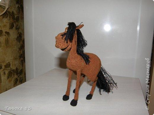 Коняшки фото 5