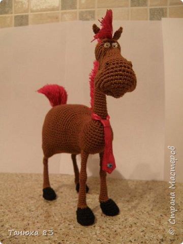 Коняшки фото 7