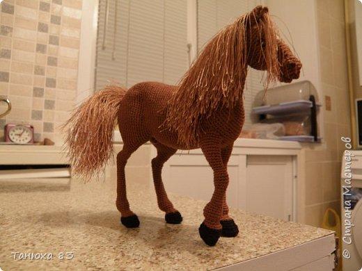 Коняшки фото 2