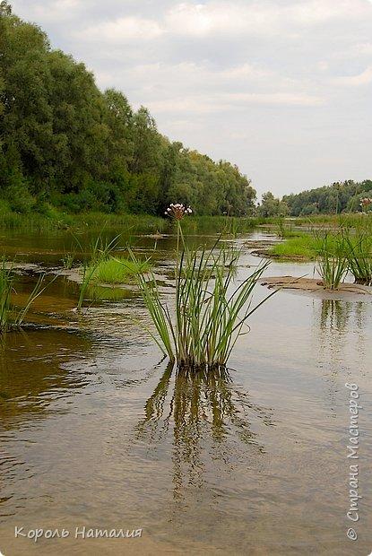 Всем доброго вечера! Спешу поделиться с вами воспоминаниями о лете... Любич - рукав Десны. Длина около 15 км, русло реки неглубокое, но течение достаточно быстрое.   фото 7