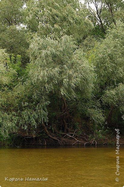 Всем доброго вечера! Спешу поделиться с вами воспоминаниями о лете... Любич - рукав Десны. Длина около 15 км, русло реки неглубокое, но течение достаточно быстрое.   фото 14