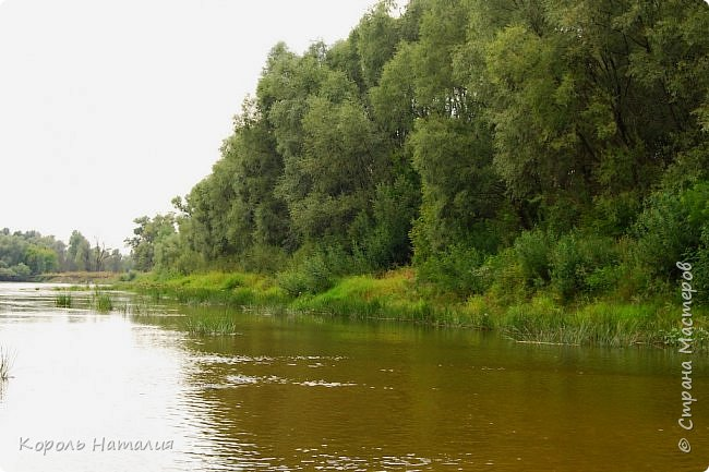 Всем доброго вечера! Спешу поделиться с вами воспоминаниями о лете... Любич - рукав Десны. Длина около 15 км, русло реки неглубокое, но течение достаточно быстрое.   фото 15
