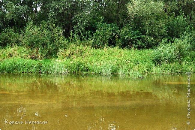 Всем доброго вечера! Спешу поделиться с вами воспоминаниями о лете... Любич - рукав Десны. Длина около 15 км, русло реки неглубокое, но течение достаточно быстрое.   фото 17