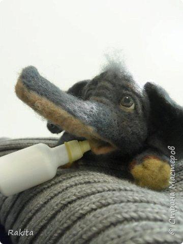 Здравствуйте жители СМ! Сегодня хочу показать слоненка, сероглазого малыша в розовых трусах. Выполнен в технике сухого валяния, глаза из полимерной глины расписаны вручную акрилом. Хобот на проволочном каркасе, можно гнуть. фото 7