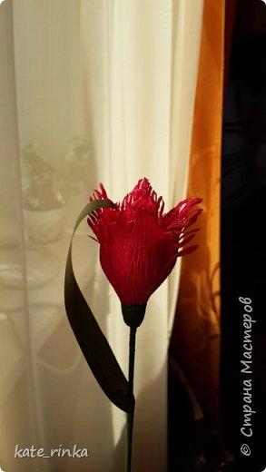 попытка создать махровый тюльпан фото 1