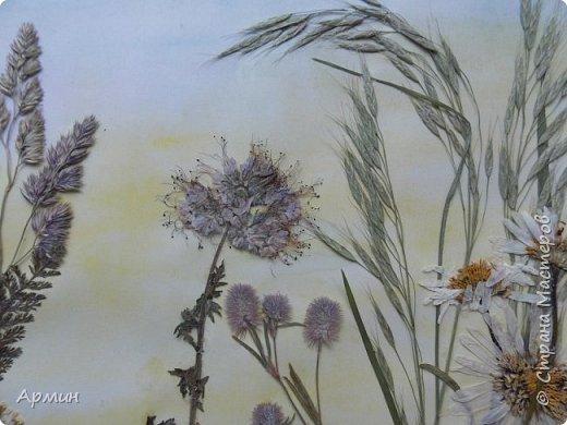 На лугу.  Плоскостная флористика. фото 4
