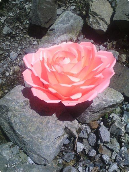 Цветы для фотосессии фото 1