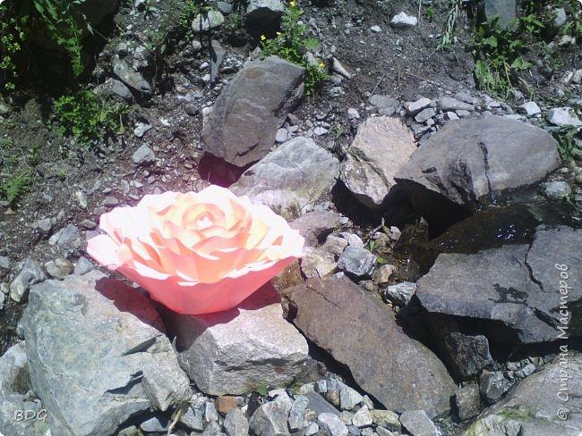 Цветы для фотосессии фото 3