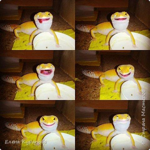 Ну,и вот такую красоту шью на заказ любителям рептилий.И,у,нас уже год как живут такие очаровашки!!! На,фото наша Фарушка,со своей почти копией)) фото 5