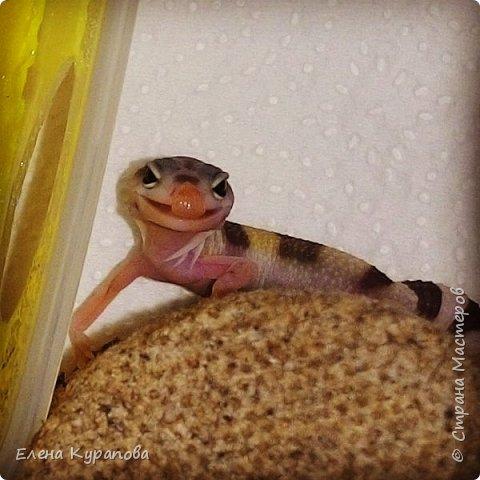 Ну,и вот такую красоту шью на заказ любителям рептилий.И,у,нас уже год как живут такие очаровашки!!! На,фото наша Фарушка,со своей почти копией)) фото 7