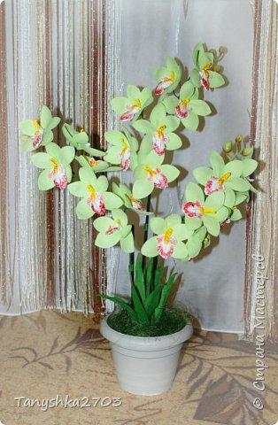 Голубая орхидея фото 11