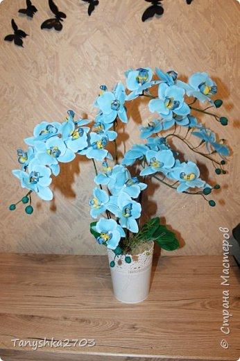 Голубая орхидея фото 1