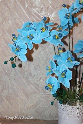 Голубая орхидея фото 2