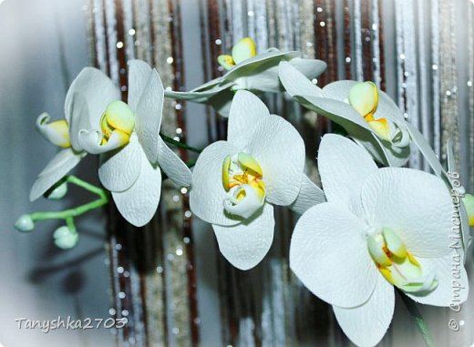 Голубая орхидея фото 4