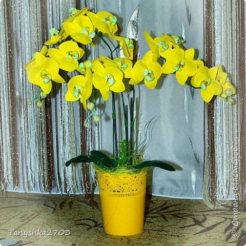 Голубая орхидея фото 7