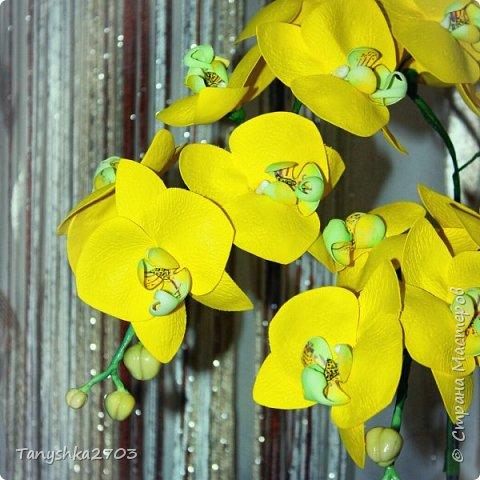 Голубая орхидея фото 8