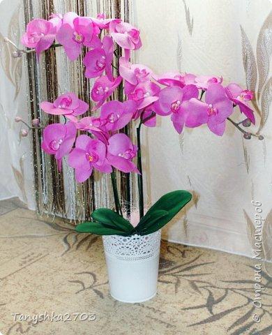 Голубая орхидея фото 9