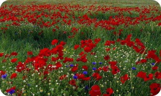 Лето. Ах, лето! Лето знойное, лето красное... И зеленое, и цветастое... фото 15