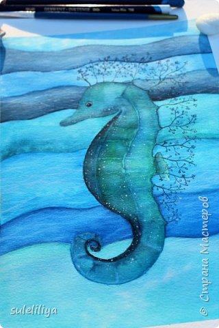 seahorse фото 2