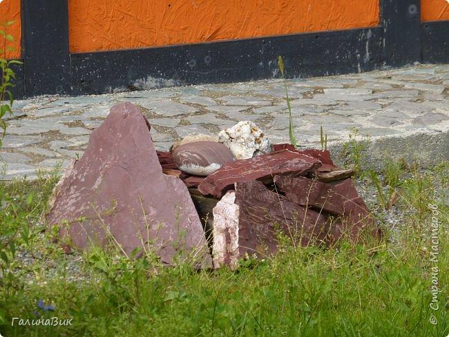"""Ну вот, и подошло время последнего алтайского фоторепортажа. """"Палеопарк"""" - это самый большой музей естественной истории в Сибири по количеству палеонтологических экспонатов. Он начал функционировать всего лишь с июля 2015 года. Музей открыл новосибирский палеонтолог Игорь Гребнев, собиравший музейные экспонаты в течение 20 лет. фото 11"""