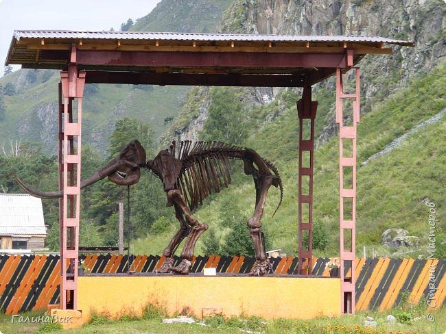 """Ну вот, и подошло время последнего алтайского фоторепортажа. """"Палеопарк"""" - это самый большой музей естественной истории в Сибири по количеству палеонтологических экспонатов. Он начал функционировать всего лишь с июля 2015 года. Музей открыл новосибирский палеонтолог Игорь Гребнев, собиравший музейные экспонаты в течение 20 лет. фото 16"""
