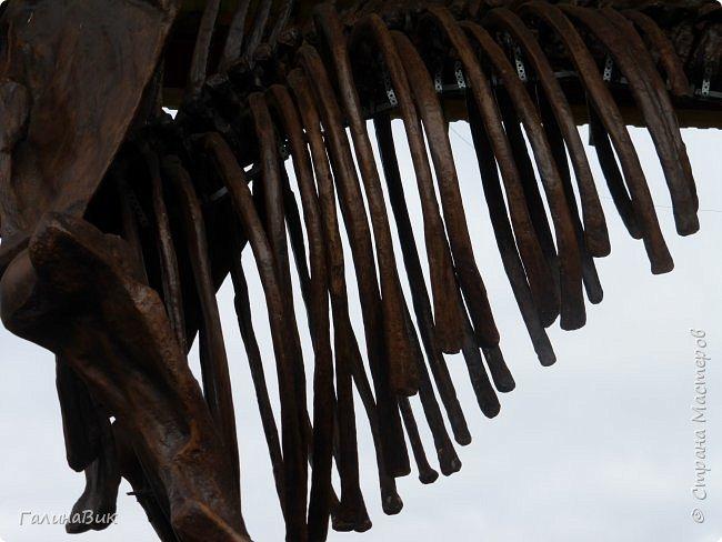 """Ну вот, и подошло время последнего алтайского фоторепортажа. """"Палеопарк"""" - это самый большой музей естественной истории в Сибири по количеству палеонтологических экспонатов. Он начал функционировать всего лишь с июля 2015 года. Музей открыл новосибирский палеонтолог Игорь Гребнев, собиравший музейные экспонаты в течение 20 лет. фото 18"""
