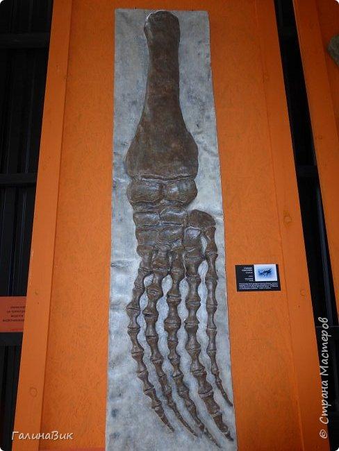 """Ну вот, и подошло время последнего алтайского фоторепортажа. """"Палеопарк"""" - это самый большой музей естественной истории в Сибири по количеству палеонтологических экспонатов. Он начал функционировать всего лишь с июля 2015 года. Музей открыл новосибирский палеонтолог Игорь Гребнев, собиравший музейные экспонаты в течение 20 лет. фото 21"""